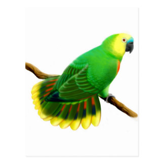 Blue-fronted Parrot clipart #11, Download drawings