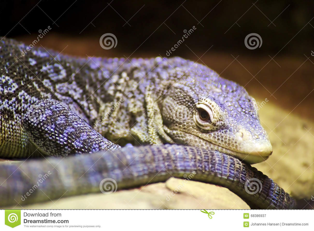 Blue-spotted Tree Monitor clipart #19, Download drawings