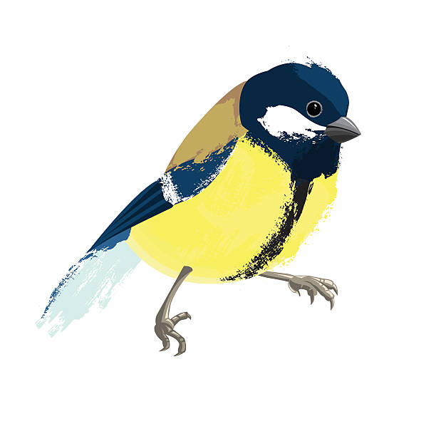 Blue-winged Warbler clipart #16, Download drawings