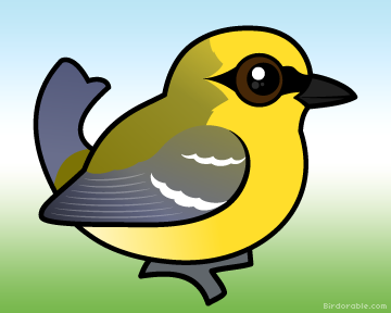Blue-winged Warbler clipart #20, Download drawings