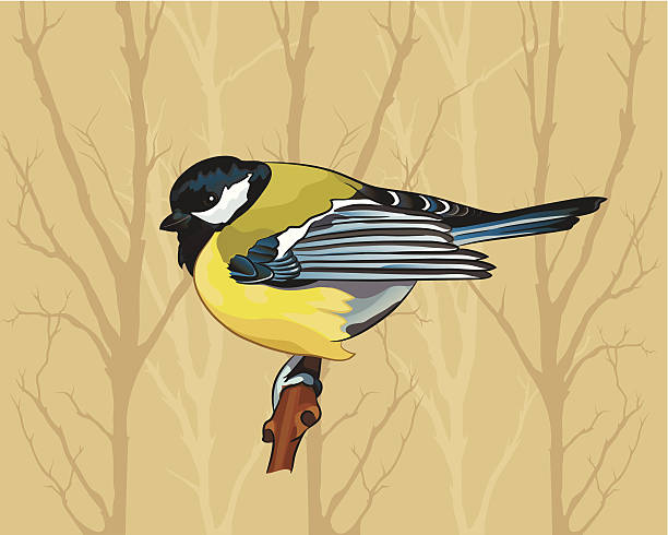 Blue-winged Warbler clipart #10, Download drawings