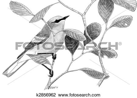 Blue-winged Warbler clipart #14, Download drawings