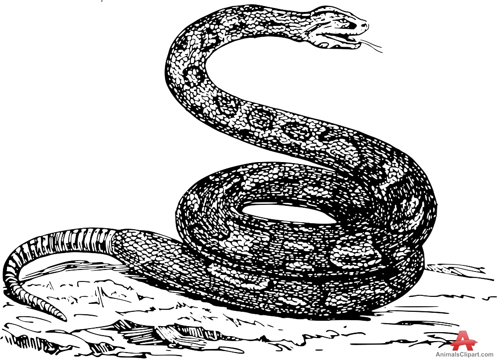 Boa Constrictor clipart #1, Download drawings