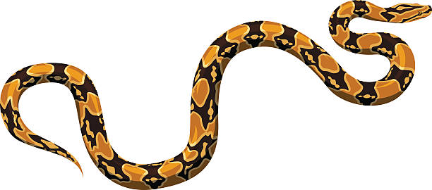 Boa Constrictor clipart #9, Download drawings