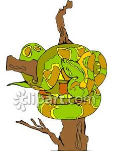 Boa Constrictor clipart #16, Download drawings