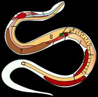 Garter Snake svg #20, Download drawings