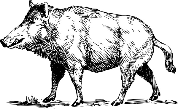 Boar clipart #14, Download drawings