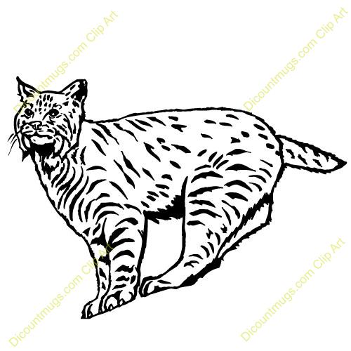 Bobcat clipart #7, Download drawings