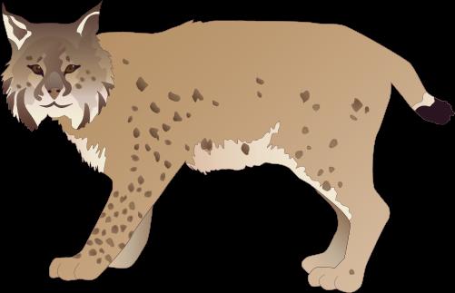 Bobcat svg #7, Download drawings
