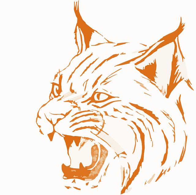 Bobcat svg #8, Download drawings