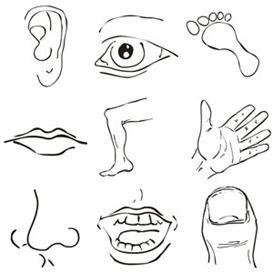 Body Art clipart #12, Download drawings