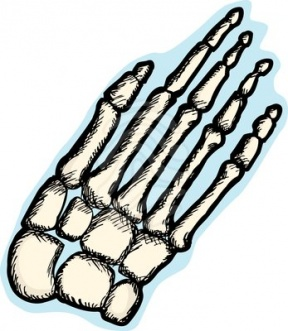 Bones clipart #7, Download drawings
