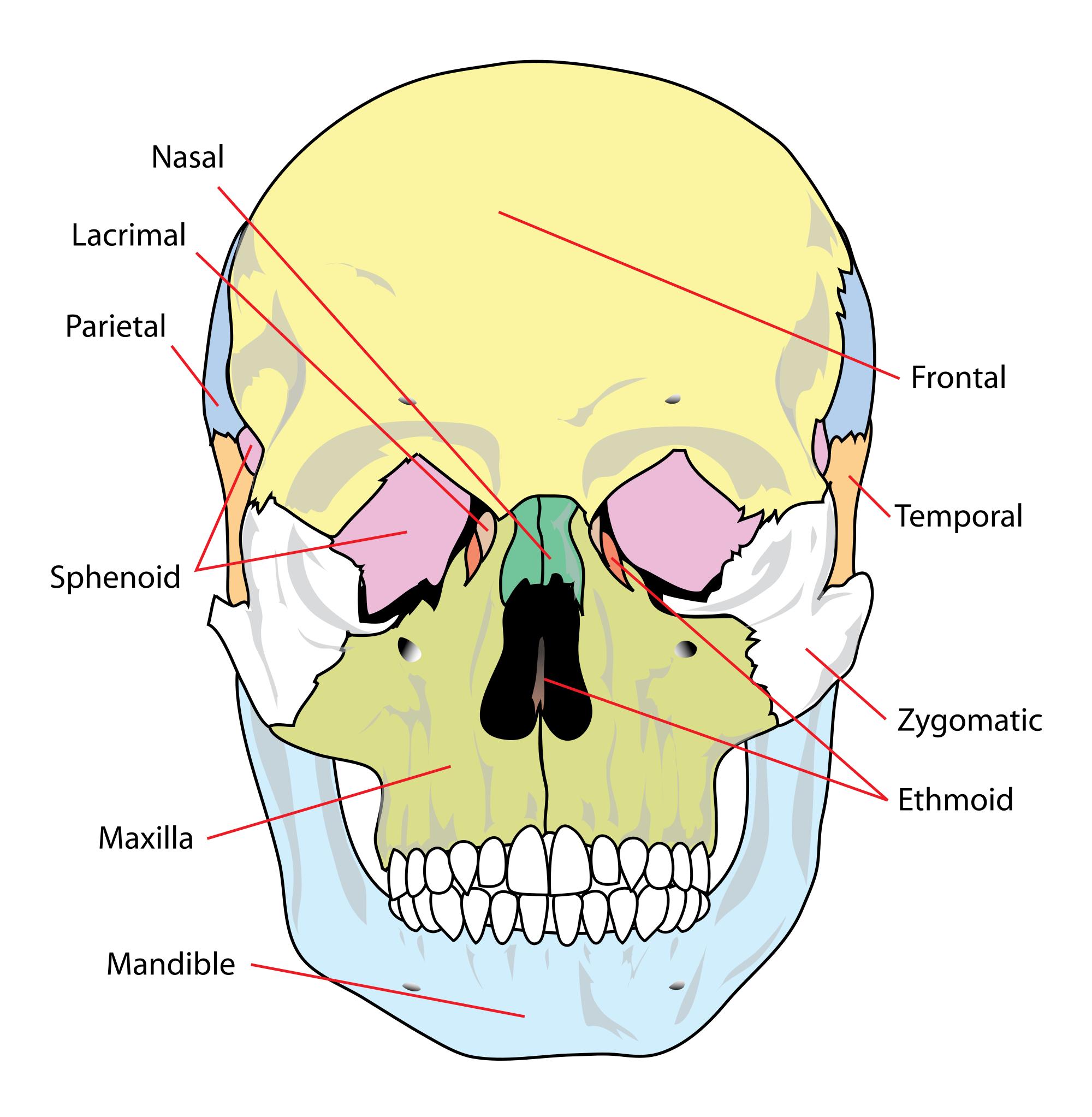 Bones svg #7, Download drawings