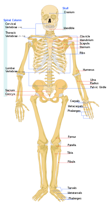 Bones svg #11, Download drawings
