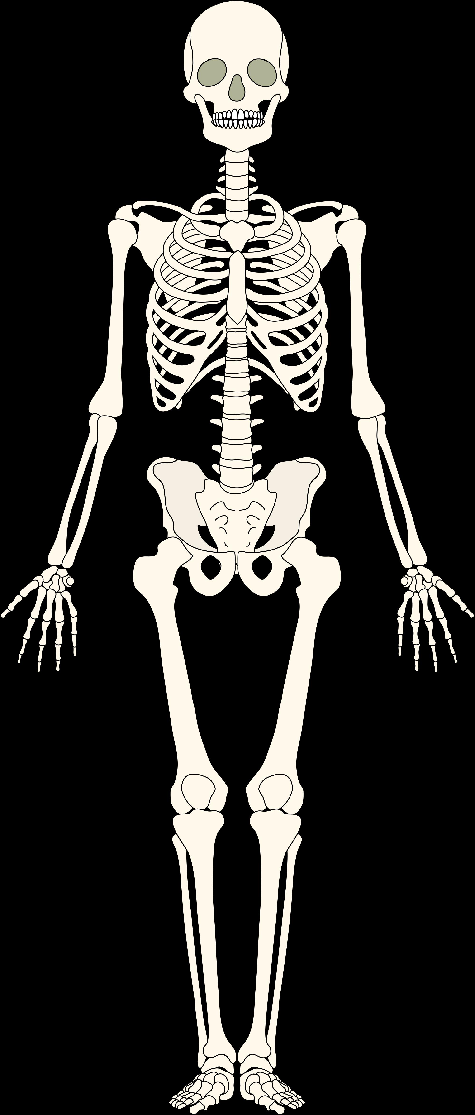 Bones svg #10, Download drawings