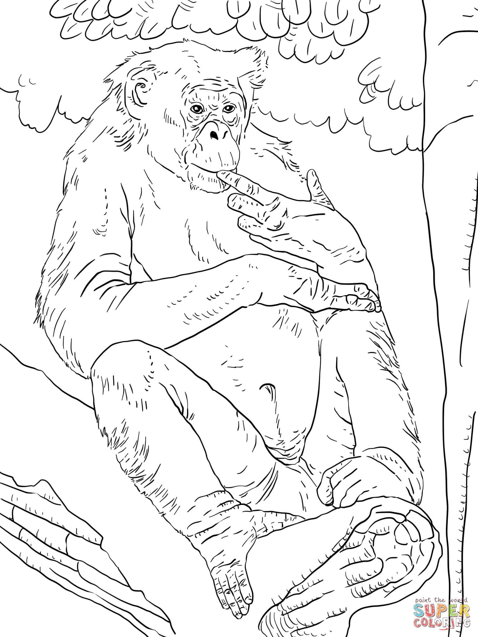 Bonobo coloring #6, Download drawings