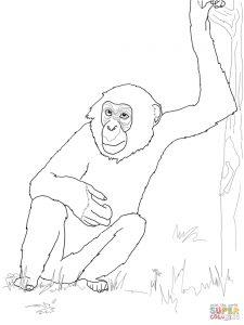 Bonobo coloring #17, Download drawings