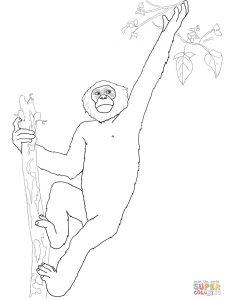 Bonobo coloring #1, Download drawings