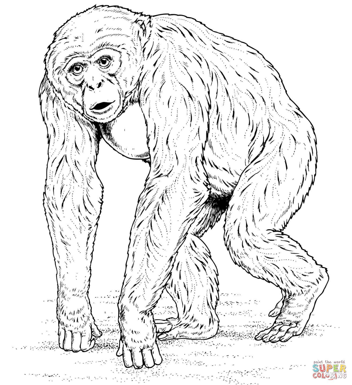 Chimpanzee coloring #9, Download drawings