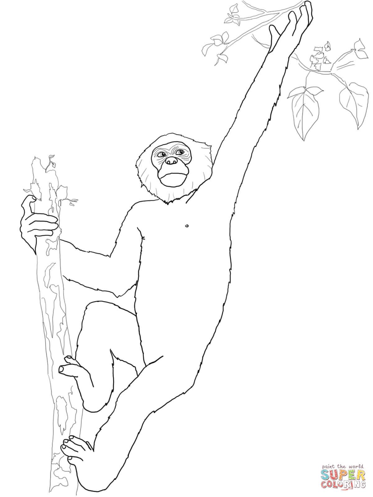 Bonobo coloring #9, Download drawings