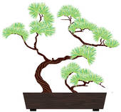 Bonsai clipart #15, Download drawings