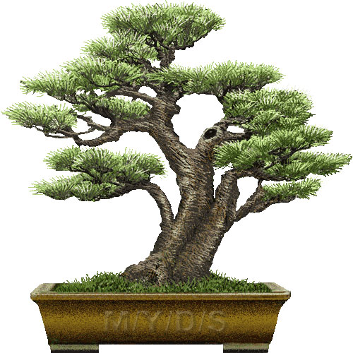 Bonsai clipart #1, Download drawings