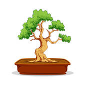 Bonsai clipart #17, Download drawings