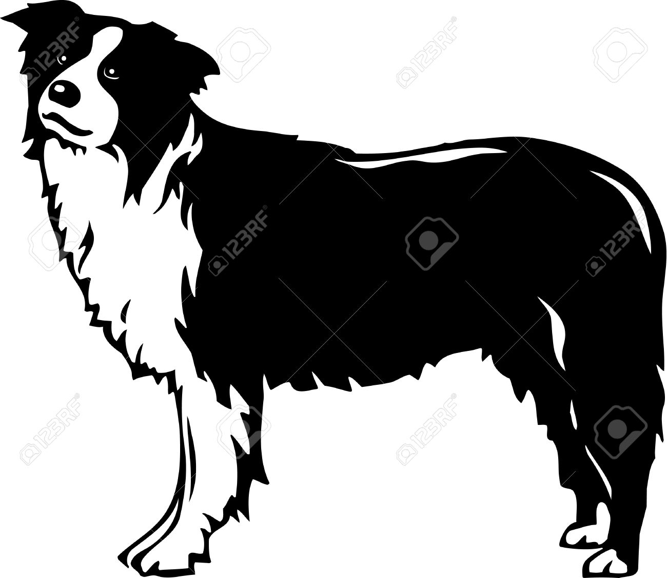 Border Collie clipart #18, Download drawings