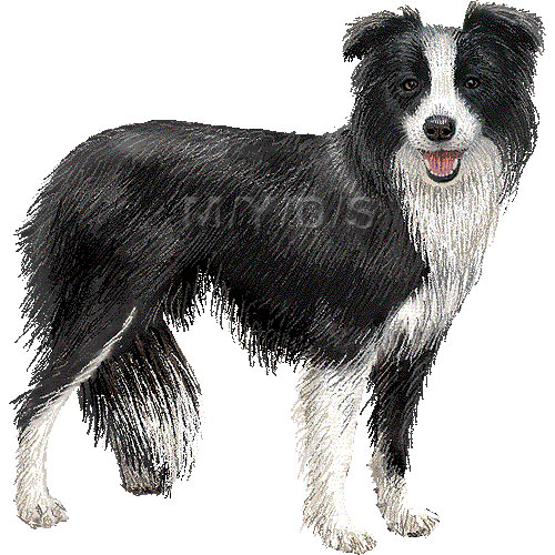 Border Collie clipart #3, Download drawings