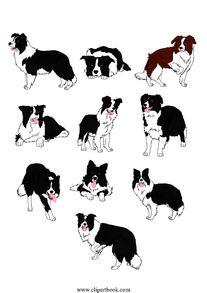 Border Collie clipart #16, Download drawings