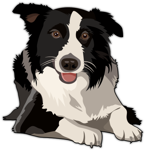 Border Collie clipart #15, Download drawings