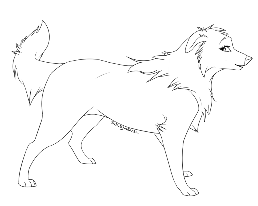 Collie coloring #6, Download drawings
