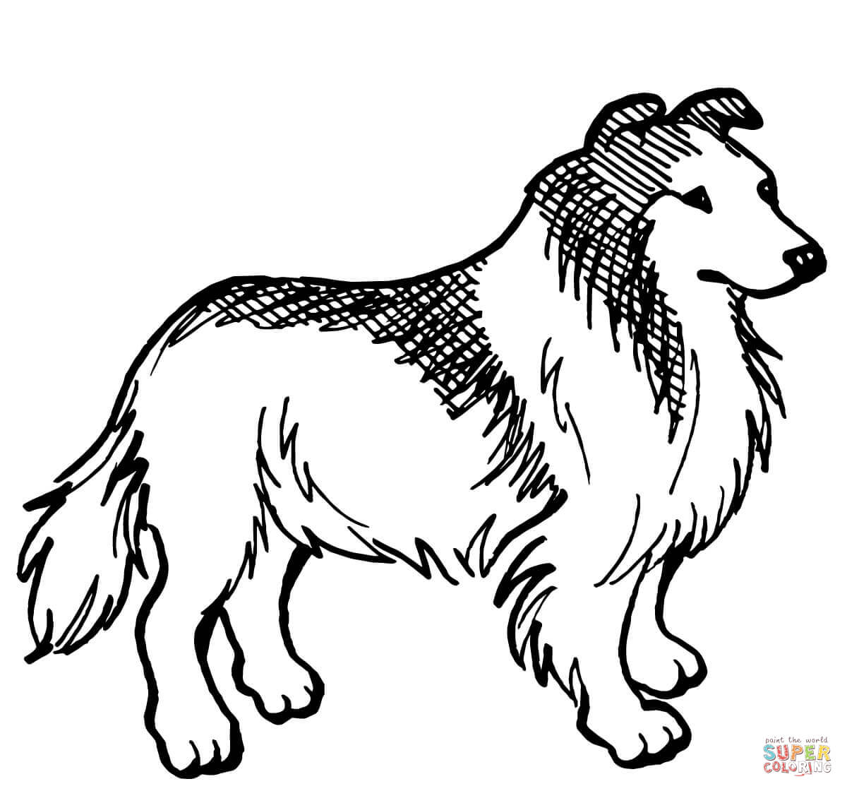 Collie coloring #19, Download drawings