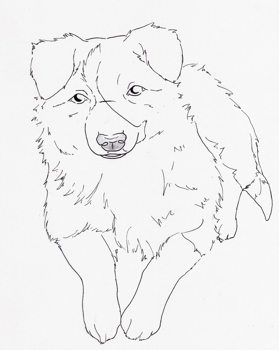 Collie coloring #4, Download drawings
