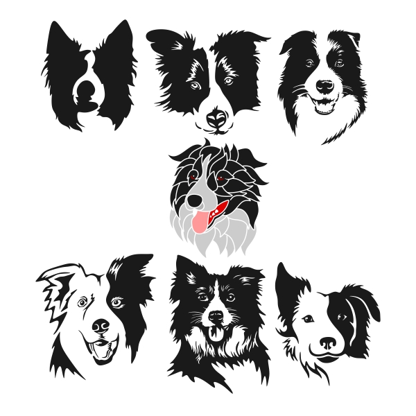 Border Collie svg #9, Download drawings