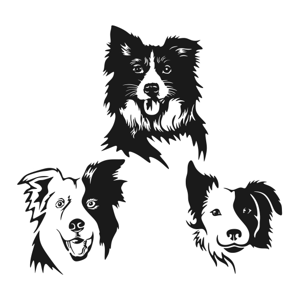 Border Collie svg #16, Download drawings