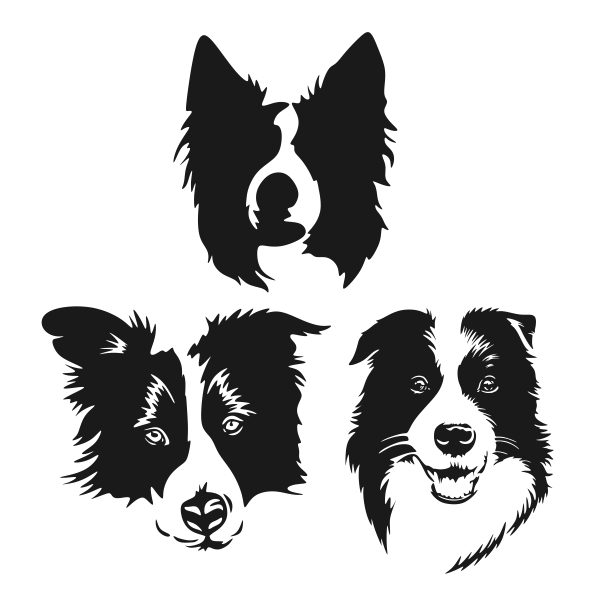 Border Collie svg #15, Download drawings