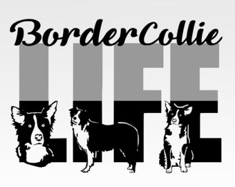 Border Collie svg #3, Download drawings