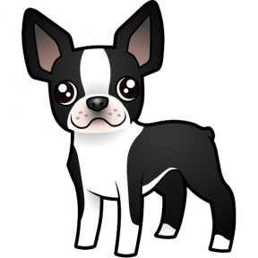 Boston Terrier clipart #13, Download drawings