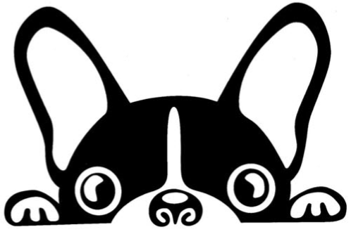 Boston Terrier clipart #2, Download drawings