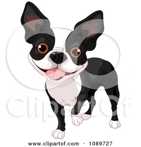 Boston Terrier clipart #3, Download drawings