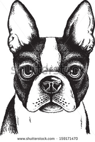 Boston Terrier clipart #4, Download drawings