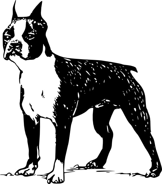 Boston Terrier clipart #17, Download drawings