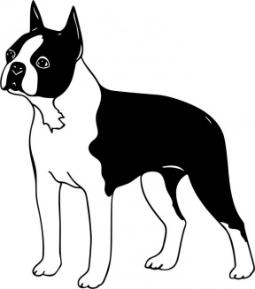 Boston Terrier clipart #9, Download drawings