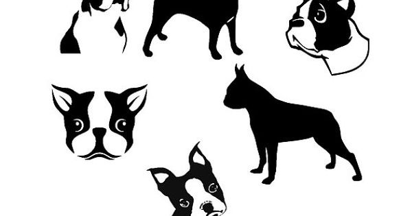 Boston Terrier svg #7, Download drawings