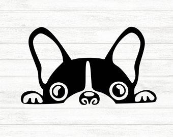 Boston Terrier svg #4, Download drawings