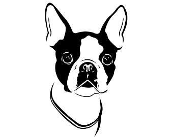 Boston Terrier svg #19, Download drawings