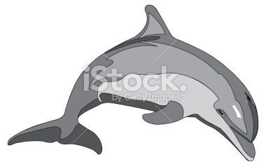 Bottlenose clipart #11, Download drawings