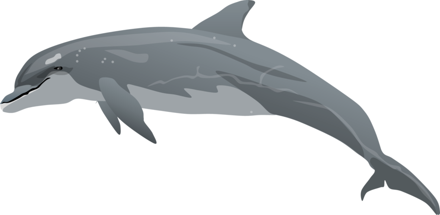 Bottlenose clipart #8, Download drawings