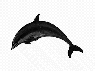 Bottlenose Dolphin clipart #16, Download drawings
